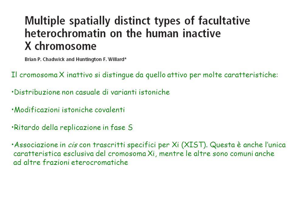 Il cromosoma X inattivo si distingue da quello attivo per molte caratteristiche: Distribuzione non casuale di varianti istoniche Modificazioni istonic