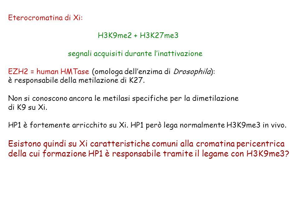 Eterocromatina di Xi: H3K9me2 + H3K27me3 segnali acquisiti durante linattivazione EZH2 = human HMTase (omologa dellenzima di Drosophila): è responsabi