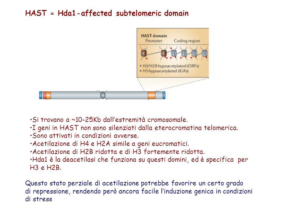 HAST = Hda1-affected subtelomeric domain Si trovano a ~10-25Kb dallestremità cromosomale. I geni in HAST non sono silenziati dalla eterocromatina telo