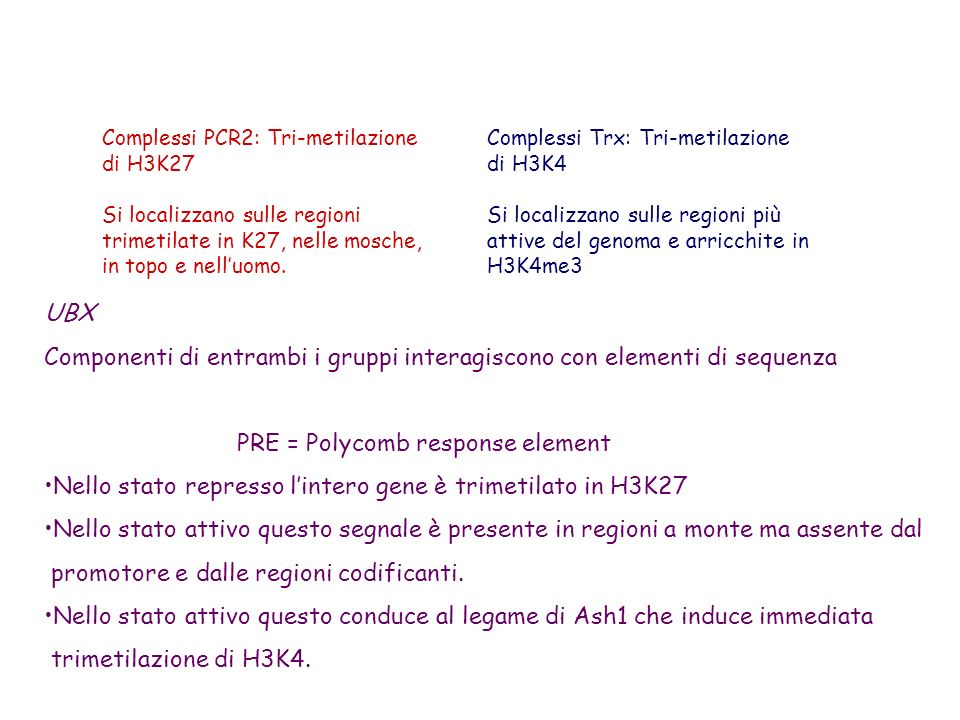 Complessi PCR2: Tri-metilazione di H3K27 Si localizzano sulle regioni trimetilate in K27, nelle mosche, in topo e nelluomo. Complessi Trx: Tri-metilaz