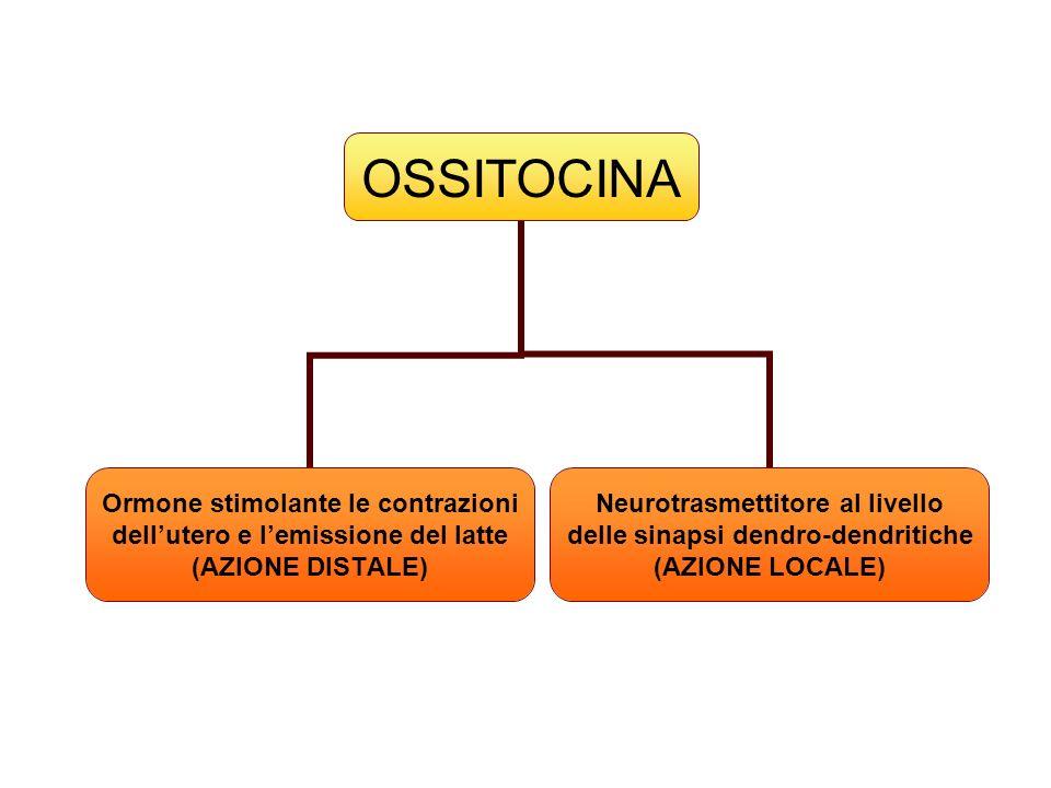 OSSITOCINA Ormone stimolante le contrazioni dellutero e lemissione del latte (AZIONE DISTALE) Neurotrasmettitore al livello delle sinapsi dendro- dend