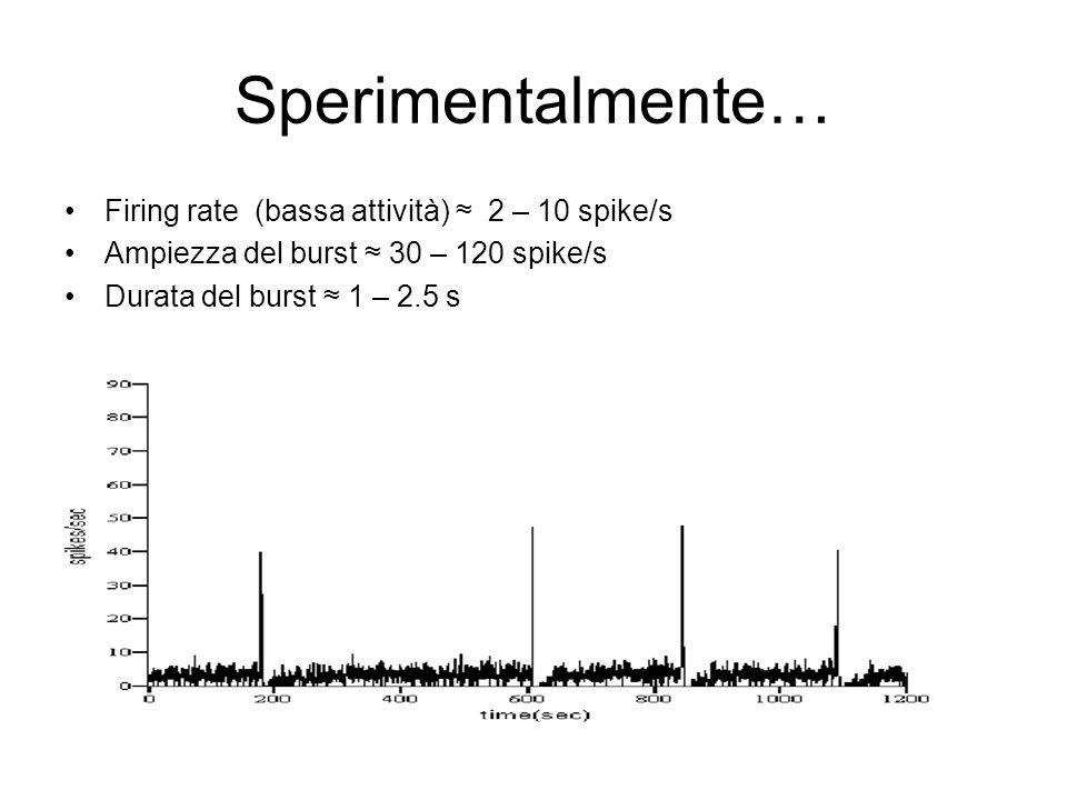 Sperimentalmente… Firing rate (bassa attività) 2 – 10 spike/s Ampiezza del burst 30 – 120 spike/s Durata del burst 1 – 2.5 s