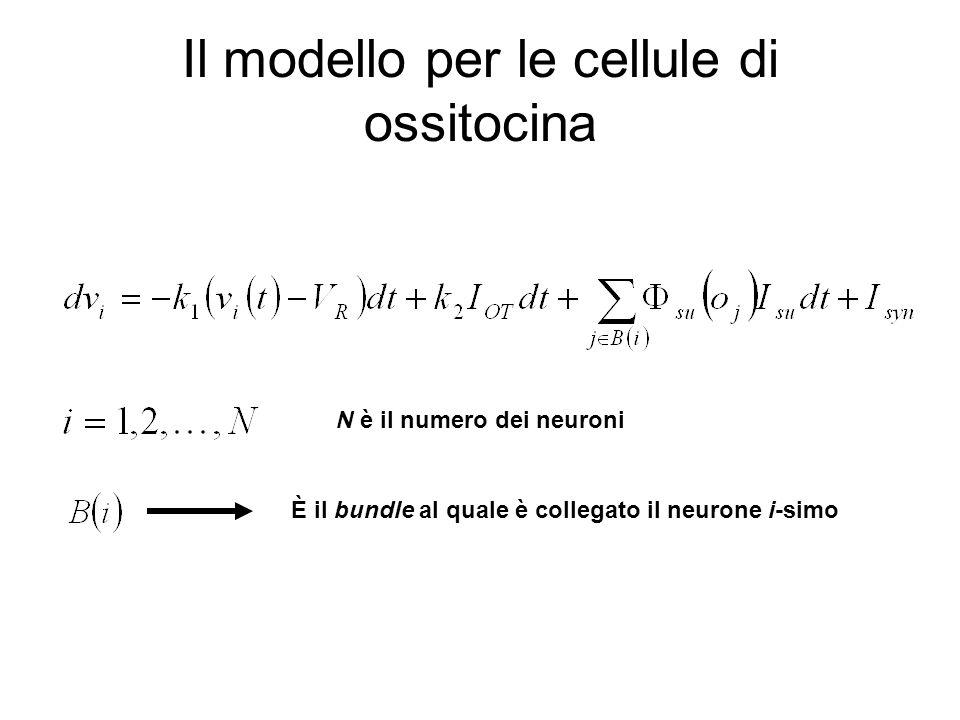 Il modello per le cellule di ossitocina N è il numero dei neuroni È il bundle al quale è collegato il neurone i-simo