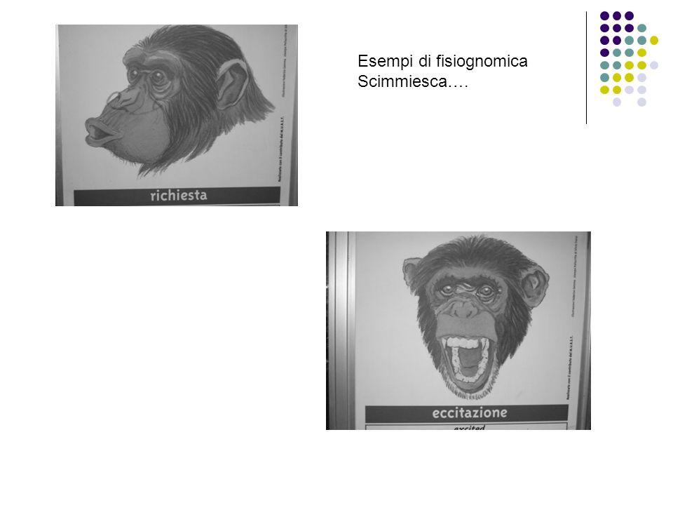 Esempi di fisiognomica Scimmiesca….