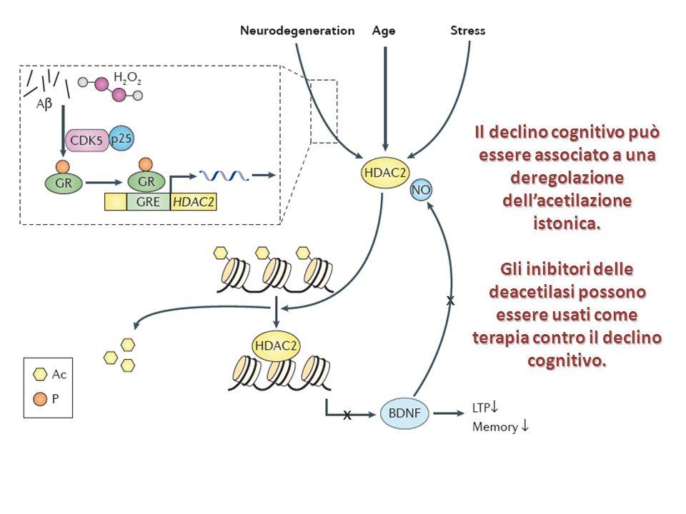 Il declino cognitivo può essere associato a una deregolazione dellacetilazione istonica. Gli inibitori delle deacetilasi possono essere usati come ter
