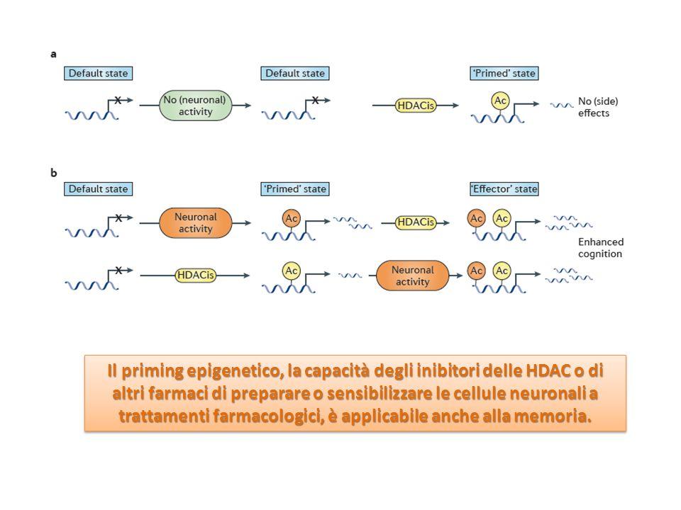 Il priming epigenetico, la capacità degli inibitori delle HDAC o di altri farmaci di preparare o sensibilizzare le cellule neuronali a trattamenti far
