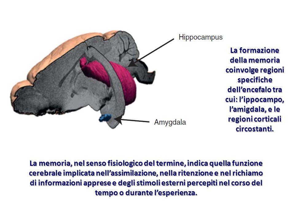 La memoria, nel senso fisiologico del termine, indica quella funzione cerebrale implicata nellassimilazione, nella ritenzione e nel richiamo di inform
