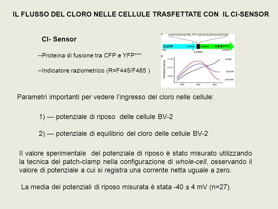 1) --- potenziale di riposo delle cellule BV-2 2) --- potenziale di equilibrio del cloro delle cellule BV-2 Il valore sperimentale del potenziale di r