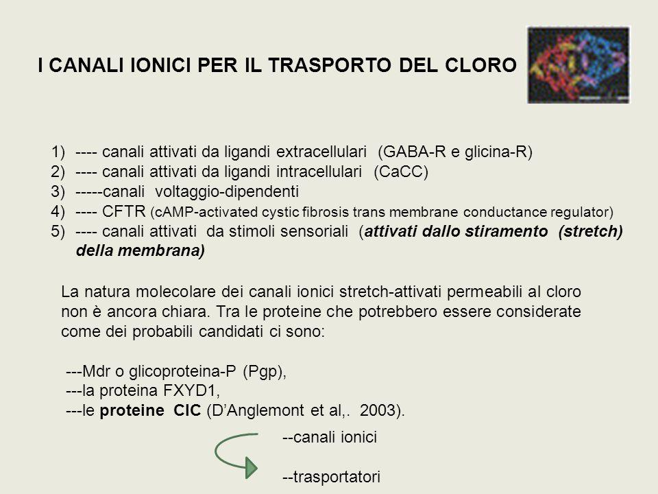 I CANALI IONICI PER IL TRASPORTO DEL CLORO 1)---- canali attivati da ligandi extracellulari (GABA-R e glicina-R) 2)---- canali attivati da ligandi int