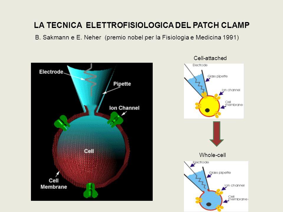 LA TECNICA ELETTROFISIOLOGICA DEL PATCH CLAMP B. Sakmann e E. Neher (premio nobel per la Fisiologia e Medicina 1991) Cell-attached Whole-cell