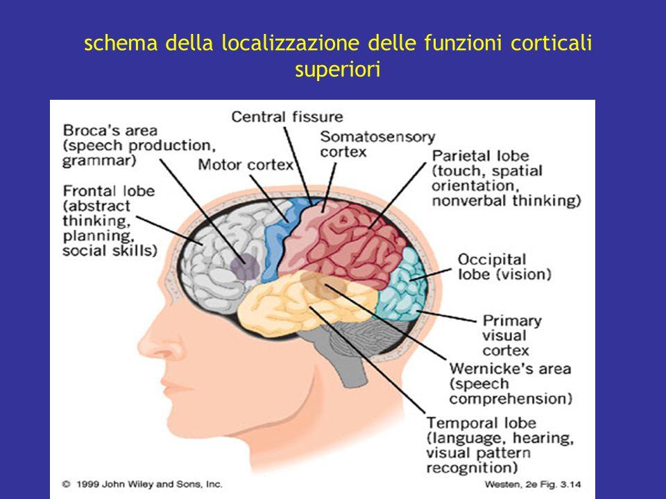 schema della localizzazione delle funzioni corticali superiori