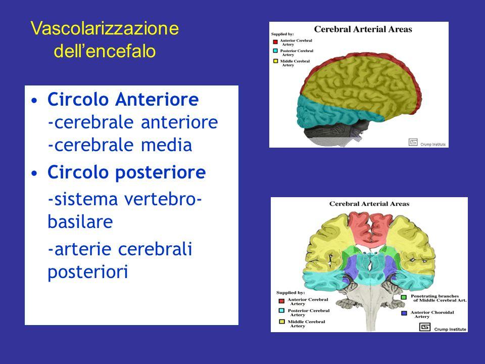 Circolo Anteriore -cerebrale anteriore -cerebrale media Circolo posteriore -sistema vertebro- basilare -arterie cerebrali posteriori Vascolarizzazione