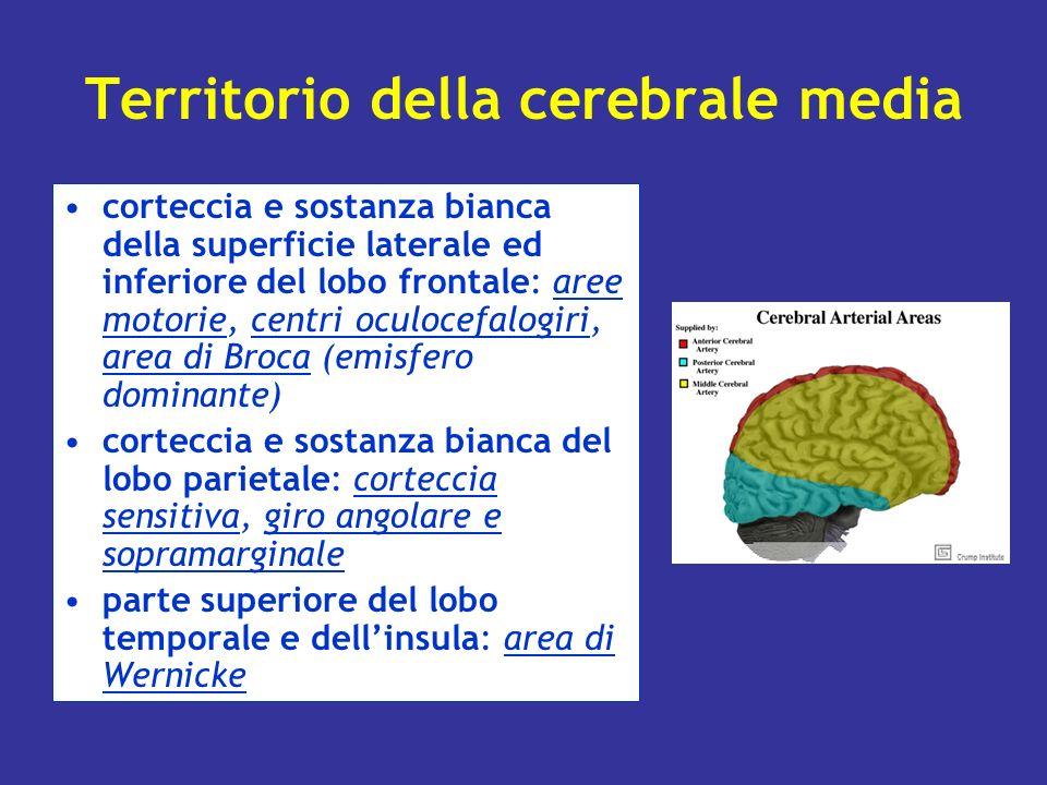 Territorio della cerebrale media corteccia e sostanza bianca della superficie laterale ed inferiore del lobo frontale: aree motorie, centri oculocefal