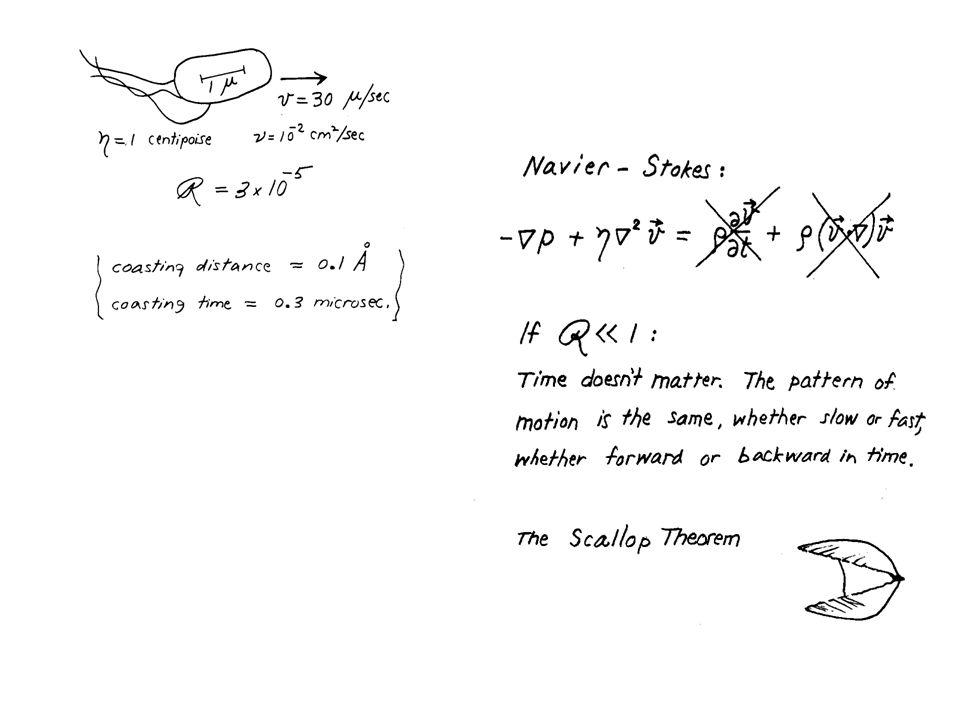 Bibliografia Landau & Lifshits, Fluid Mechanics Nelson, Biological Physics, cap.