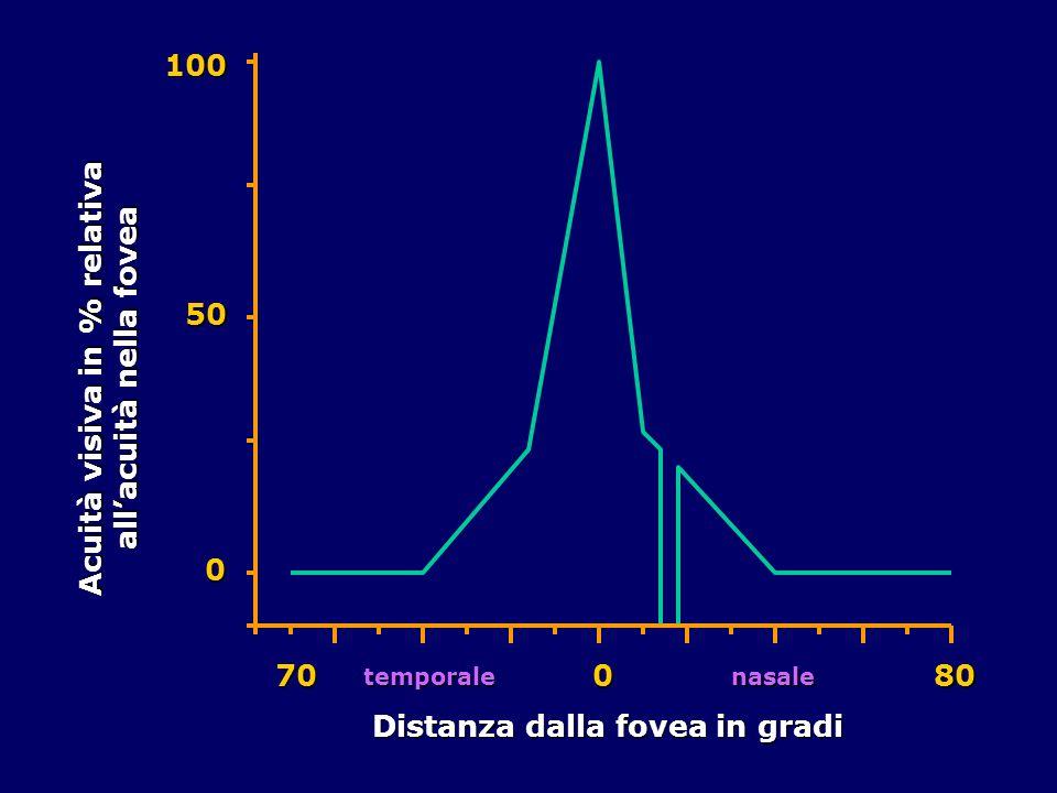 0 50100 Acuità visiva in % relativa allacuità nella fovea Distanza dalla fovea in gradi 70080 temporalenasale