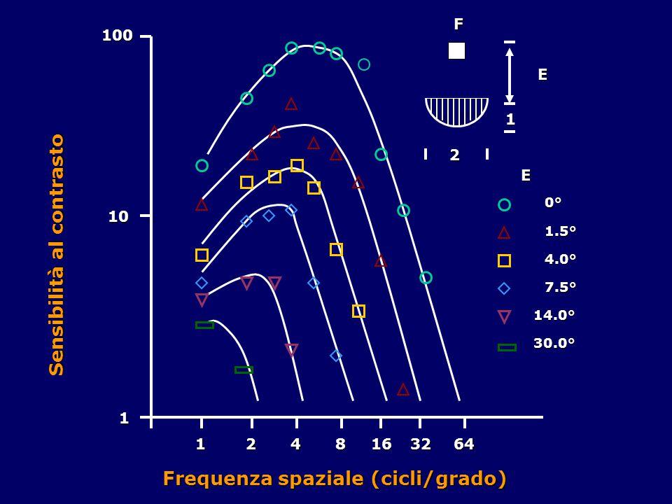 1 10 100 1248163264 2 1FE E 0° 1.5° 4.0° 7.5° 14.0° 30.0° Frequenza spaziale (cicli/grado) Sensibilità al contrasto