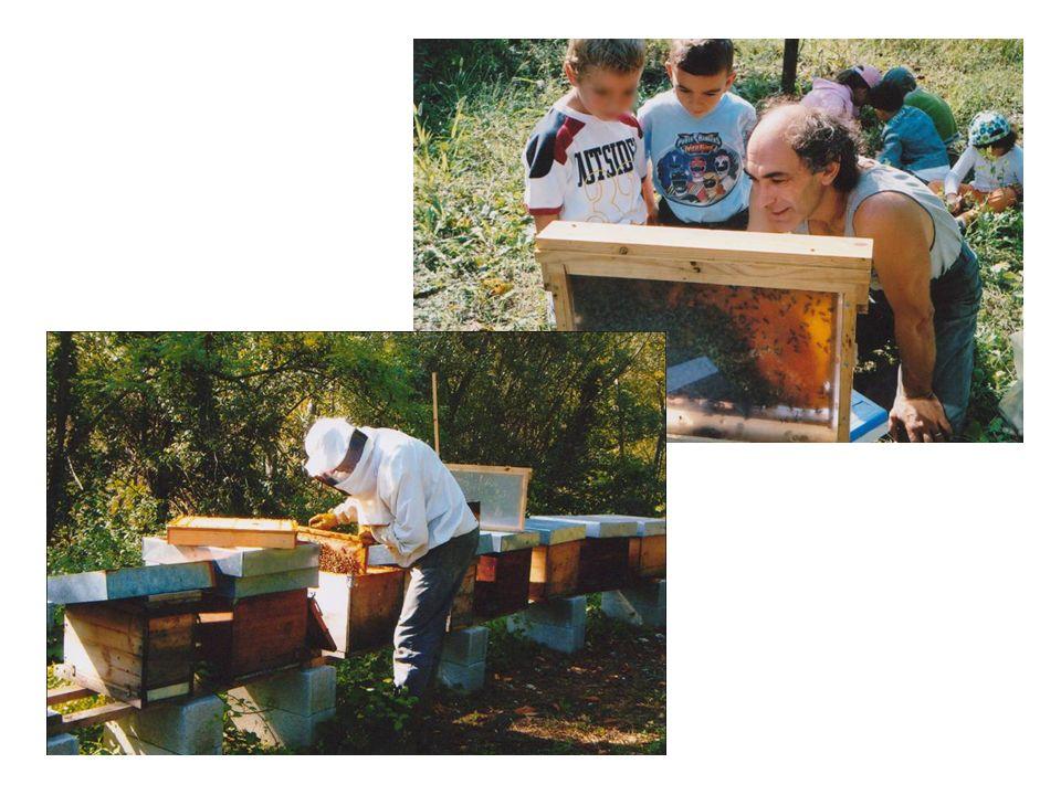 La famiglia delle api