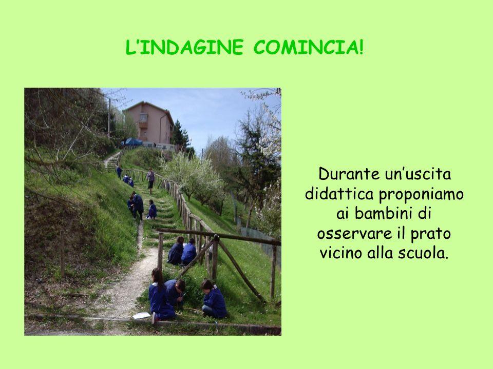 LINDAGINE COMINCIA! Durante unuscita didattica proponiamo ai bambini di osservare il prato vicino alla scuola.