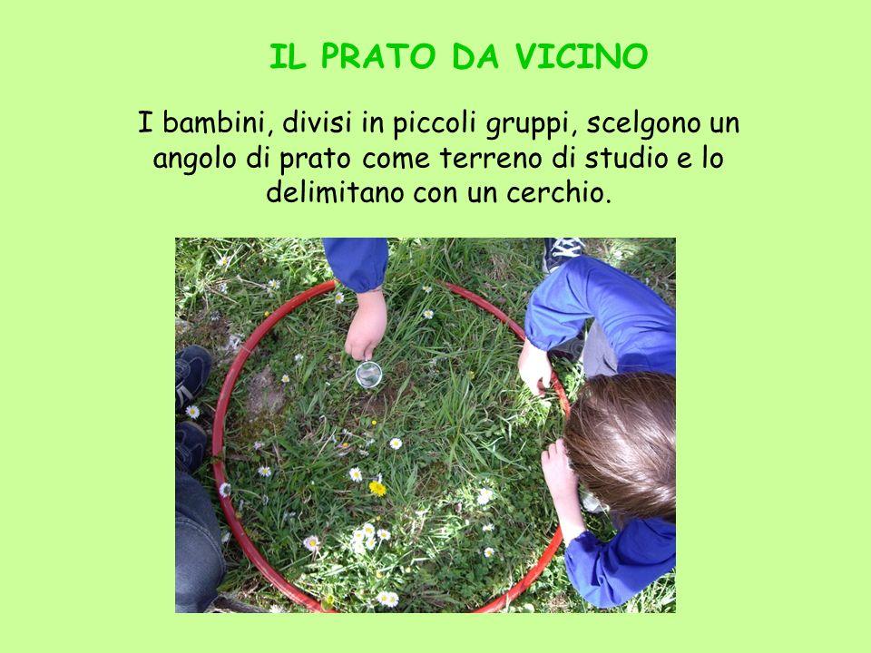 I bambini, divisi in piccoli gruppi, scelgono un angolo di prato come terreno di studio e lo delimitano con un cerchio. IL PRATO DA VICINO