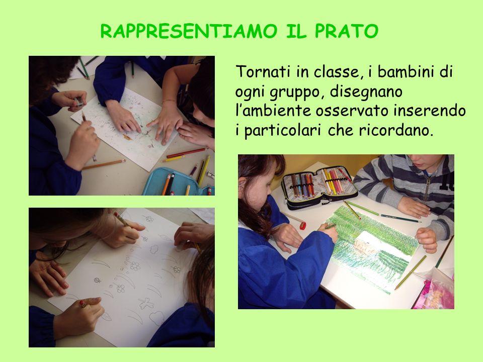 RAPPRESENTIAMO IL PRATO Tornati in classe, i bambini di ogni gruppo, disegnano lambiente osservato inserendo i particolari che ricordano.