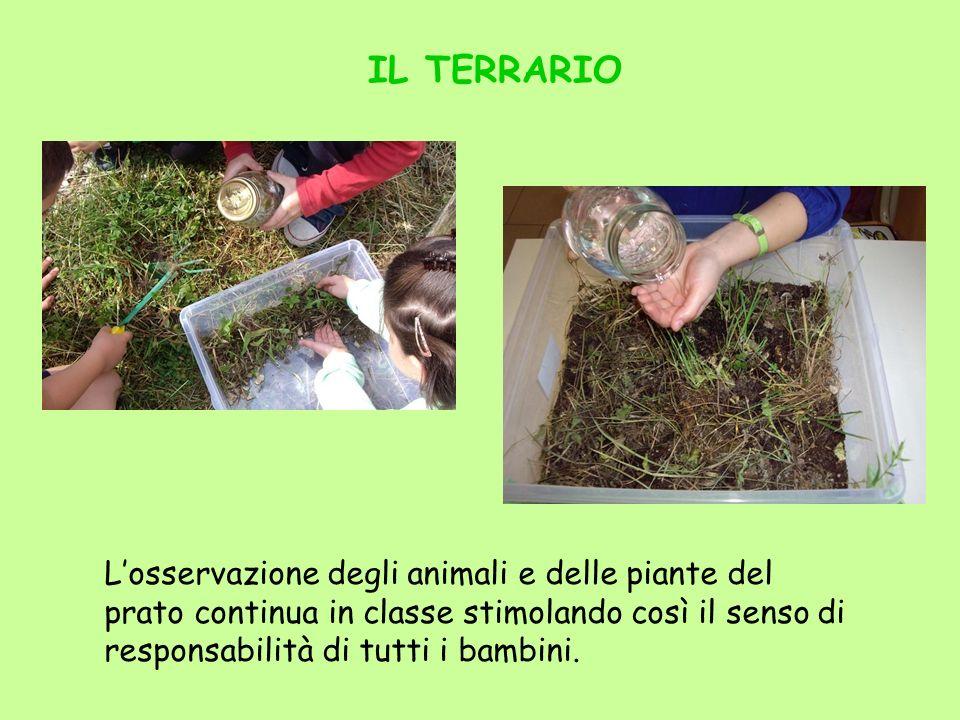 IL TERRARIO Losservazione degli animali e delle piante del prato continua in classe stimolando così il senso di responsabilità di tutti i bambini.