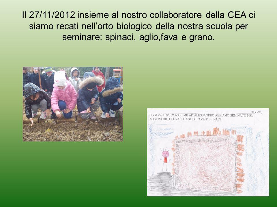 Il 27/11/2012 insieme al nostro collaboratore della CEA ci siamo recati nellorto biologico della nostra scuola per seminare: spinaci, aglio,fava e gra
