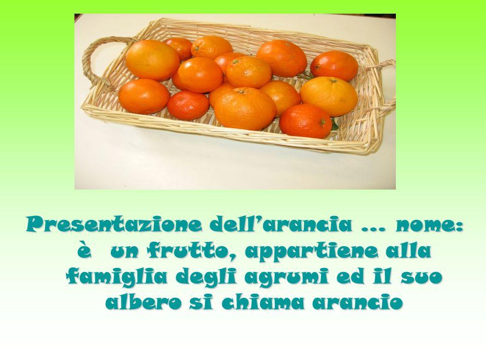 Presentazione dellarancia … nome: è un frutto, appartiene alla famiglia degli agrumi ed il suo albero si chiama arancio