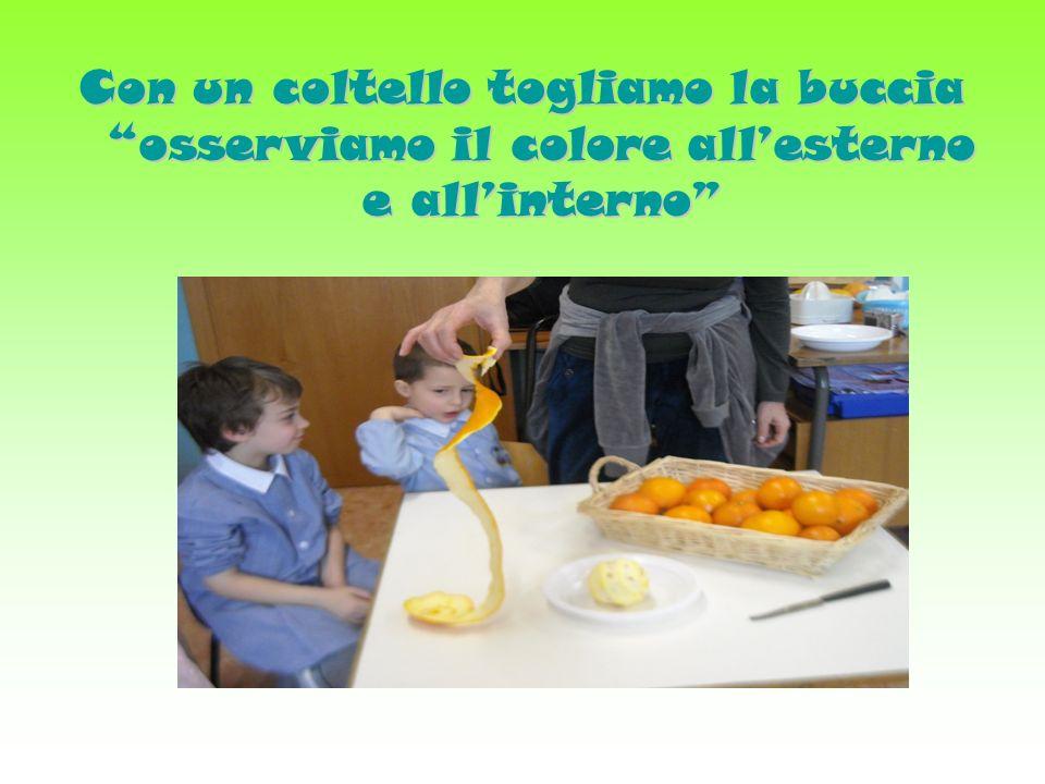 Scoperta - confronto Attraverso la suddivisione degli spicchi, i bambini si confrontano sia con le parti del frutto sia con lassaggio, prendendo consapevolezza e avviandosi alla conoscenza della struttura,esterna ed interna dellarancia