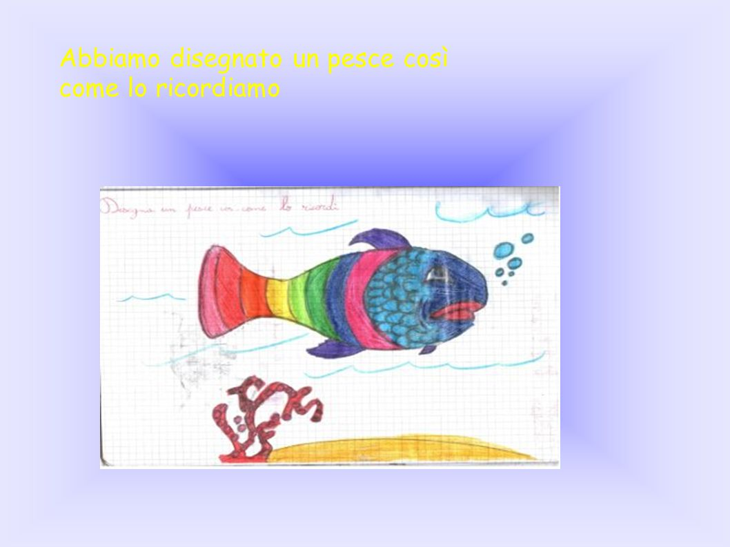 Dopo l osservazione di un pesce dal vivo, lo abbiamo disegnato di nuovo.