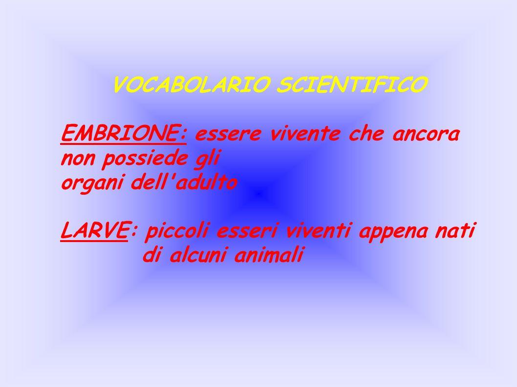 VOCABOLARIO SCIENTIFICO EMBRIONE: essere vivente che ancora non possiede gli organi dell adulto LARVE: piccoli esseri viventi appena nati di alcuni animali