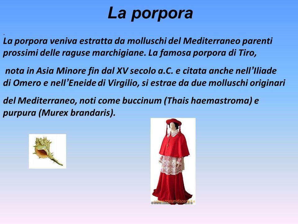 La porpora. La porpora veniva estratta da molluschi del Mediterraneo parenti prossimi delle raguse marchigiane. La famosa porpora di Tiro, nota in Asi