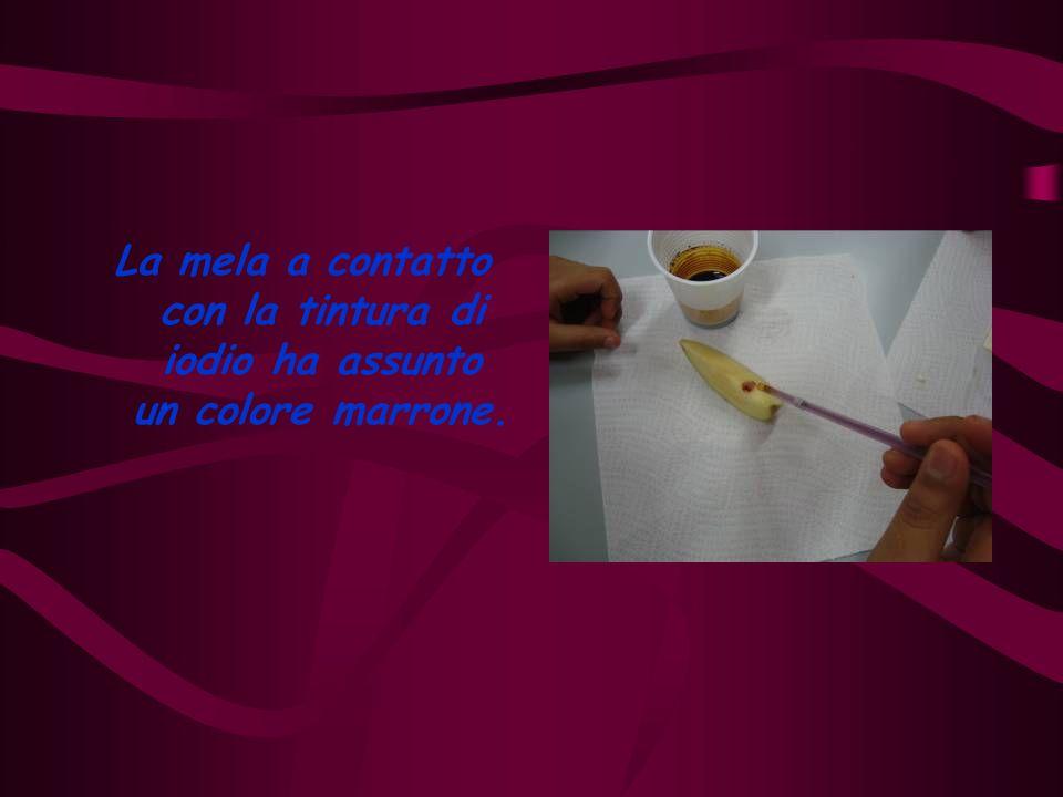 Aggiungendo una goccia di tintura di iodio sopra il formaggio abbiamo osservato che il colore ottenuto è Marrone.