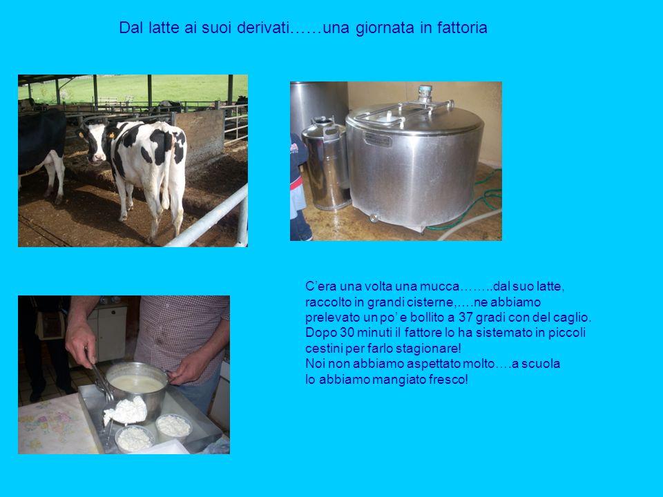 Dal latte ai suoi derivati……una giornata in fattoria Cera una volta una mucca……..dal suo latte, raccolto in grandi cisterne,….ne abbiamo prelevato un