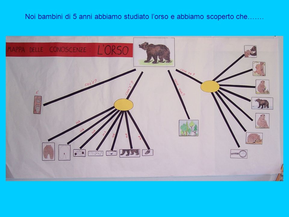 Noi bambini di 5 anni abbiamo studiato lorso e abbiamo scoperto che…….