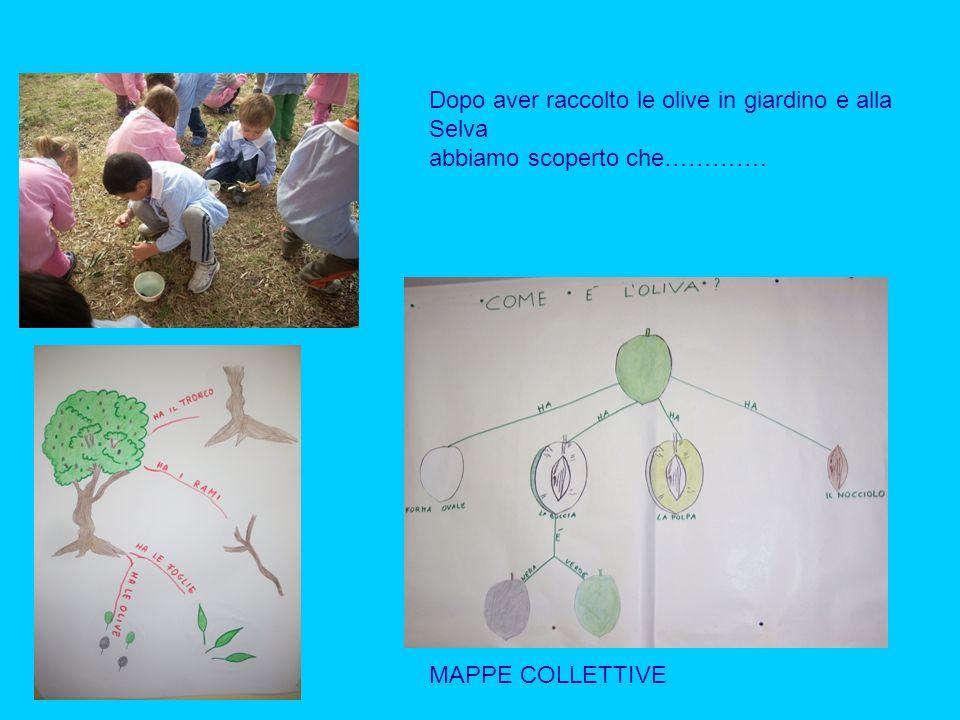 Dopo aver raccolto le olive in giardino e alla Selva abbiamo scoperto che…………. MAPPE COLLETTIVE