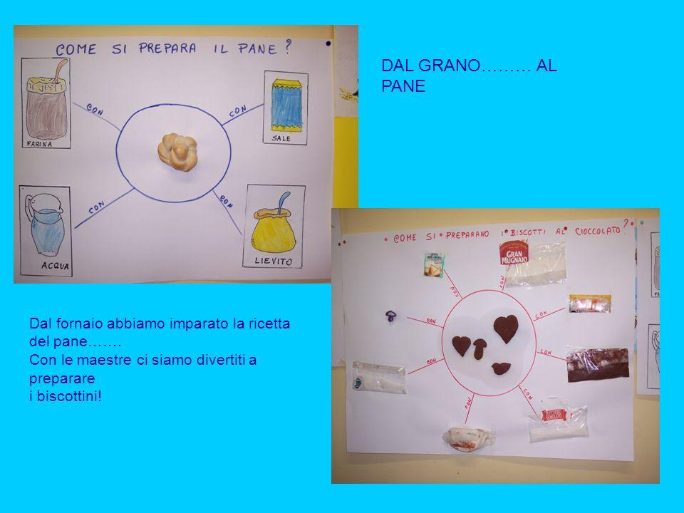 DAL GRANO……… AL PANE Dal fornaio abbiamo imparato la ricetta del pane……. Con le maestre ci siamo divertiti a preparare i biscottini!