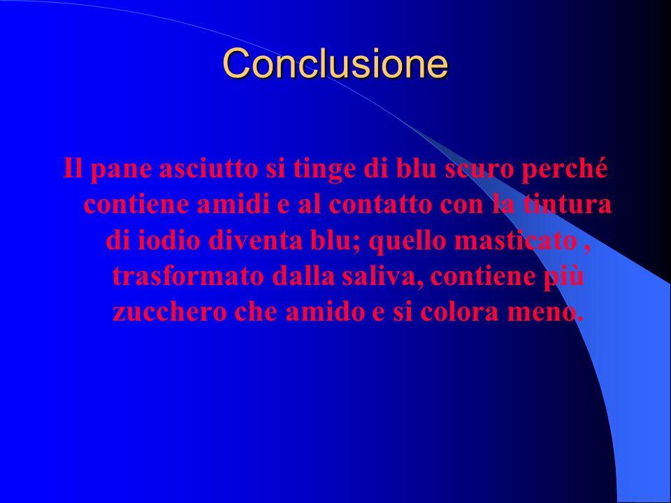 Conclusione Il pane asciutto si tinge di blu scuro perché contiene amidi e al contatto con la tintura di iodio diventa blu; quello masticato, trasform