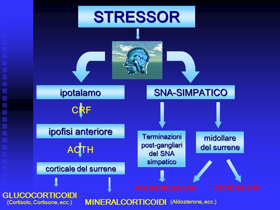 STRESSOR ipotalamo CRF SNA-SIMPATICO ipofisi anteriore ACTH corticale del surrene GLUCOCORTICOIDI midollare del surrene NORADRENALINA ADRENALINA MINERALCORTICOIDI (Cortisolo, Cortisone, ecc.) (Aldosterone, ecc.) Terminazioni post-gangliari del SNA simpatico