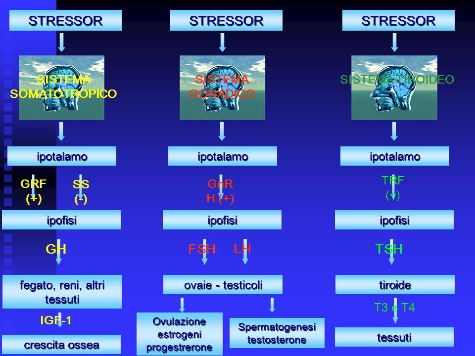 STRESSOR ipotalamo GRF (+) ipofisi GH fegato, reni, altri tessuti SS (-) crescita ossea IGF-1 STRESSOR ipotalamo GnR H (+) ipofisi FSH ovaie - testicoli Ovulazione estrogeni progestrerone STRESSOR ipotalamo TRF (+) ipofisi TSH tiroide tessuti T3 e T4 SISTEMA SOMATOTROPICO SISTEMA GONADICO SISTEMA TIROIDEO LH Spermatogenesi testosterone