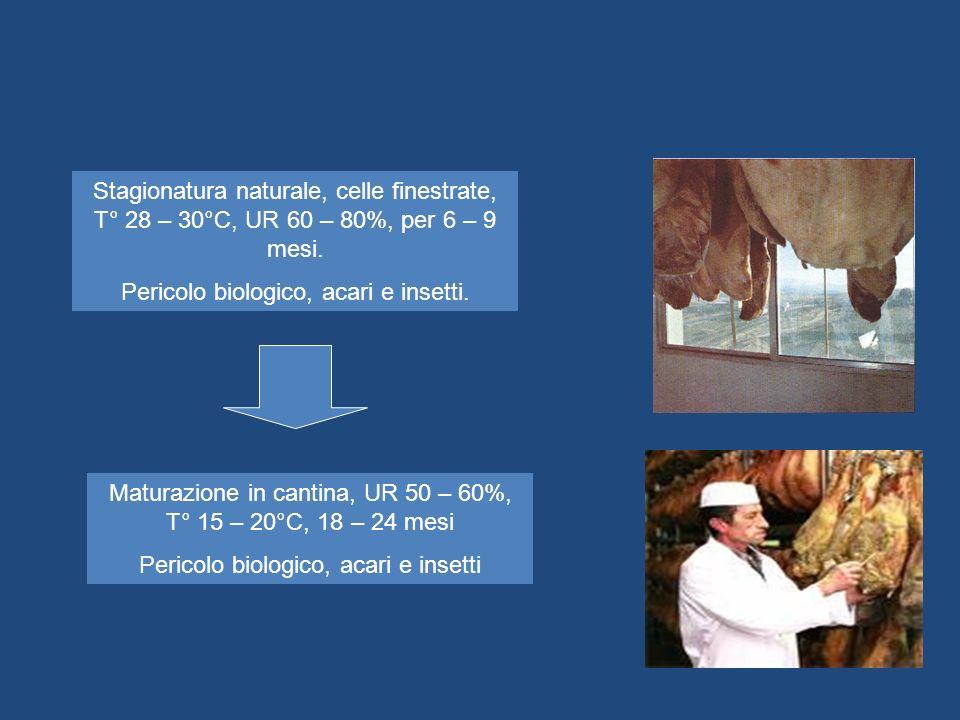 Stagionatura naturale, celle finestrate, T° 28 – 30°C, UR 60 – 80%, per 6 – 9 mesi. Pericolo biologico, acari e insetti. Maturazione in cantina, UR 50