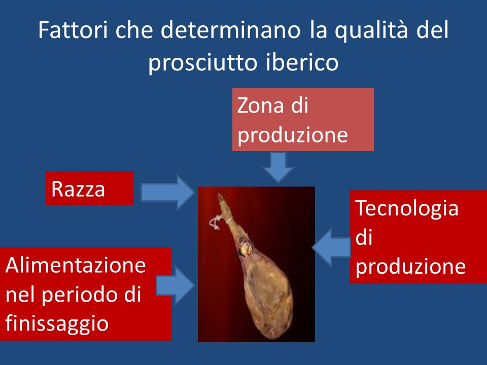 Fattori che determinano la qualità del prosciutto iberico Razza Alimentazione nel periodo di finissaggio Zona di produzione Tecnologia di produzione