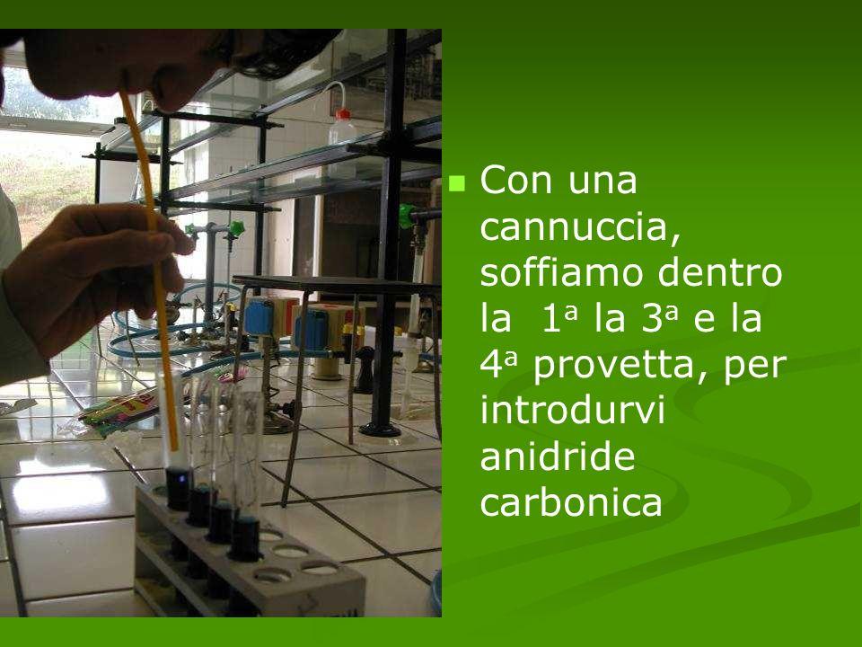 Con una cannuccia, soffiamo dentro la 1 a la 3 a e la 4 a provetta, per introdurvi anidride carbonica