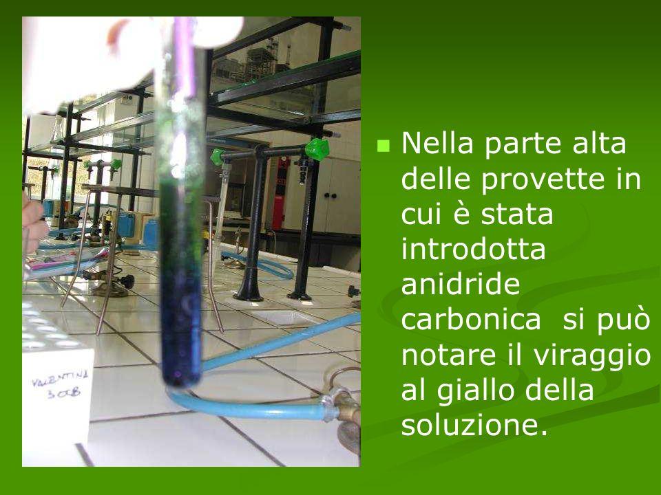 Nella parte alta delle provette in cui è stata introdotta anidride carbonica si può notare il viraggio al giallo della soluzione.