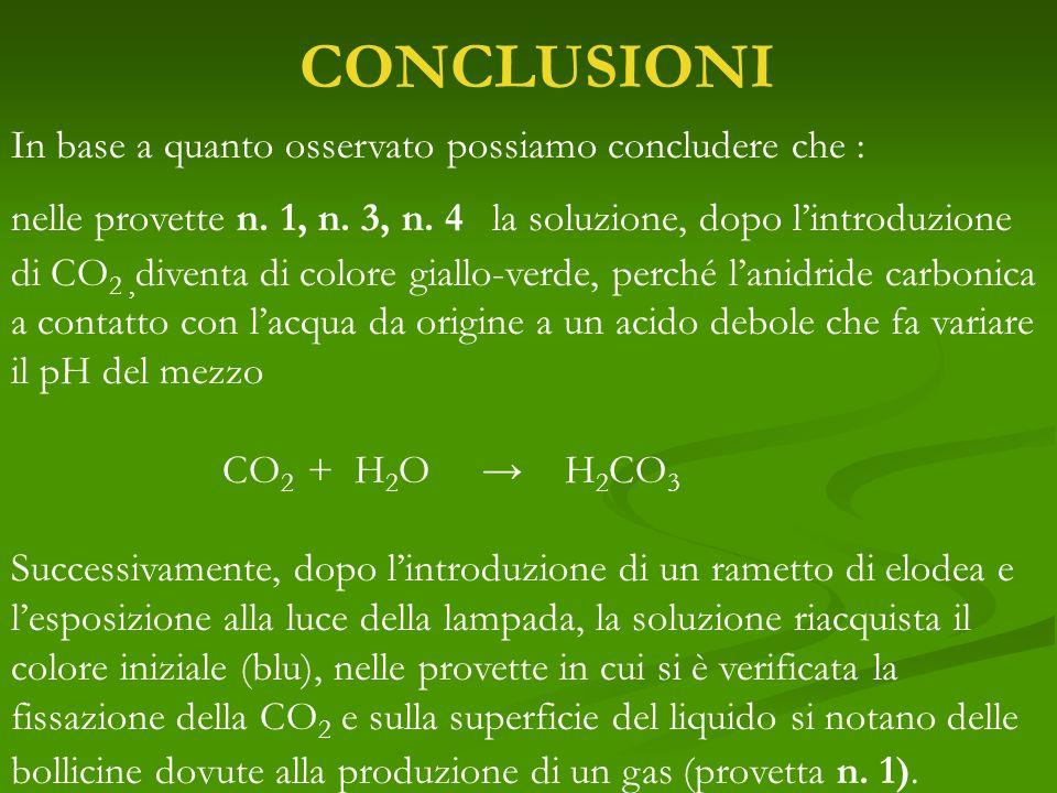 CONCLUSIONI In base a quanto osservato possiamo concludere che : nelle provette n. 1, n. 3, n. 4 la soluzione, dopo lintroduzione di CO 2, diventa di