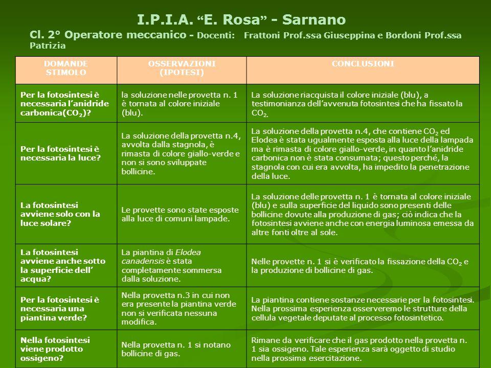 I.P.I.A. E. Rosa - Sarnano Cl. 2° Operatore meccanico - Docenti: Frattoni Prof.ssa Giuseppina e Bordoni Prof.ssa Patrizia DOMANDE STIMOLO OSSERVAZIONI