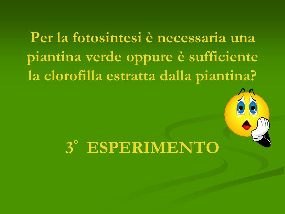 Per la fotosintesi è necessaria una piantina verde oppure è sufficiente la clorofilla estratta dalla piantina? 3 ° ESPERIMENTO