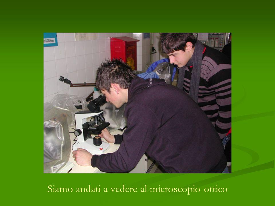 Siamo andati a vedere al microscopio ottico
