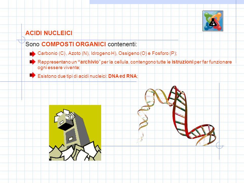 ACIDI NUCLEICI Sono COMPOSTI ORGANICI contenenti: Carbonio (C), Azoto (N), Idrogeno H), Ossigeno (O) e Fosforo (P); Rappresentano un archivio per la cellula, contengono tutte le istruzioni per far funzionare ogni essere vivente; Esistono due tipi di acidi nucleici: DNA ed RNA;