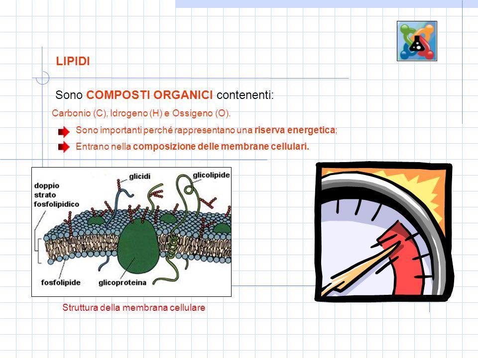 LIPIDI Sono COMPOSTI ORGANICI contenenti: Carbonio (C), Idrogeno (H) e Ossigeno (O).