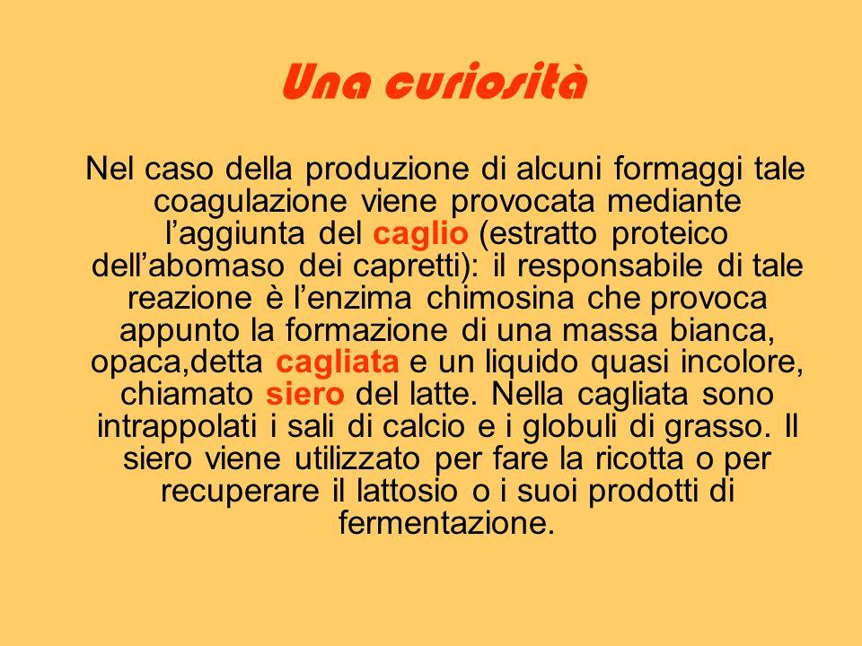 Una curiosità Nel caso della produzione di alcuni formaggi tale coagulazione viene provocata mediante laggiunta del caglio (estratto proteico dellabom